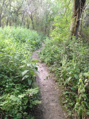 One of many single-track trails at Lime Creek.